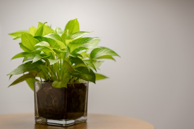 Close-up van plant in glazen pot met op tafel.