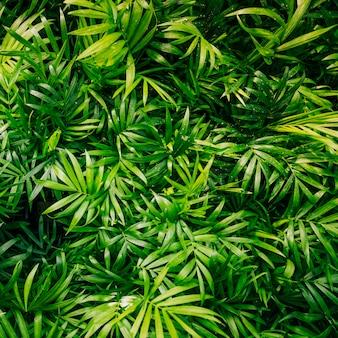 Close-up van plant met verse groene bladeren