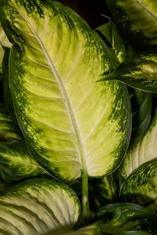 Close-up van plantgebladerte met gekleurde randen