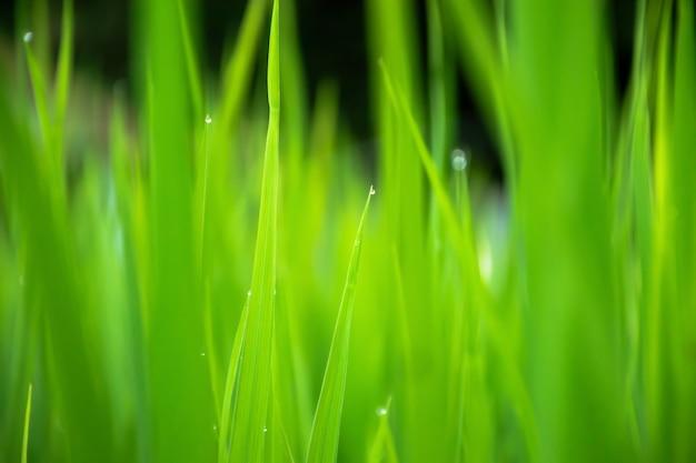 Close up van prachtig groen gras met onscherpe achtergrond.