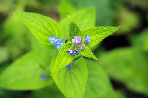 Close-up van prachtige groene bloeiende bloem buiten in de tuin
