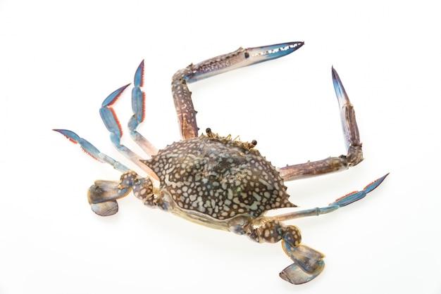 Close-up van rauwe krab