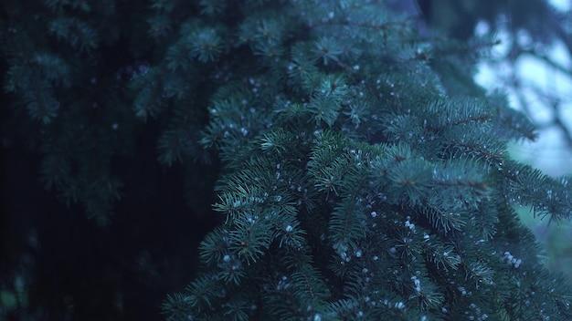 Close up van regen met hagel op de boom