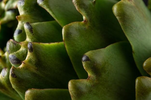 Close-up van rijpe biologische artisjok.