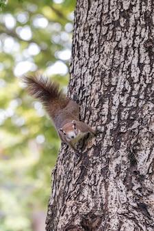 Close-up van rode eekhoorn spelen in een botanische tuin