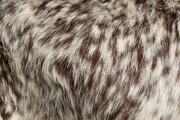 Close-up van rove-de achtergrond van het geitbont