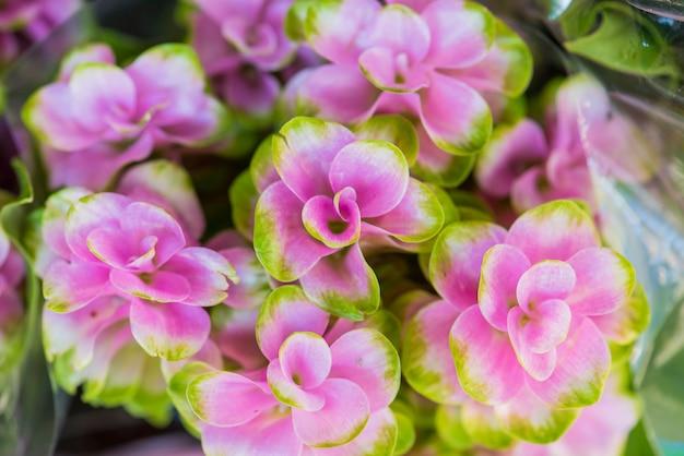 Close-up van roze bloem geweven achtergrond