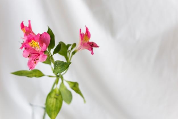 Close-up van roze leliebloemen