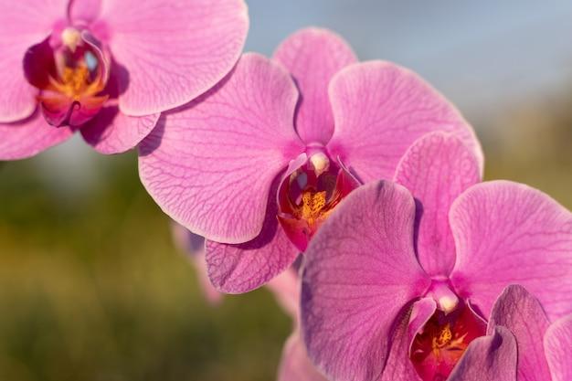 Close up van roze orchideebloem in de tuin