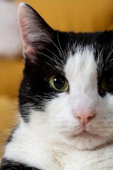 Close-up van schattige kat binnen