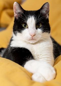 Close-up van schattige kat binnenshuis