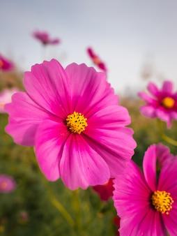 Close-up van schoonheids roze bloemen in straat