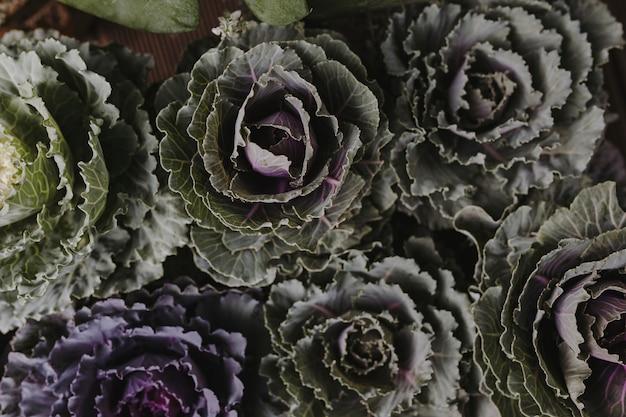Close-up van sierkolen en kales geweven achtergrond