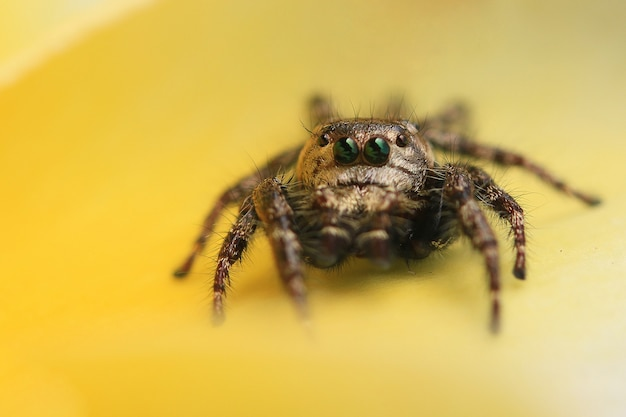Close up van spin op de gele bloem