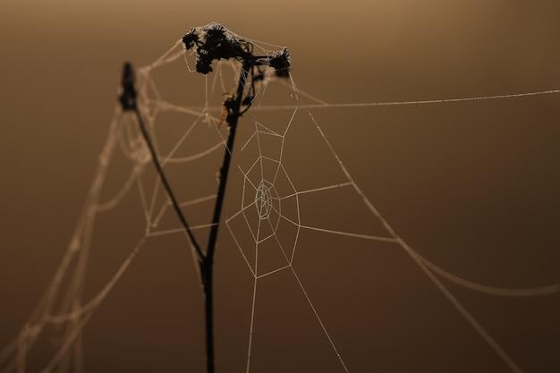 Close-up van spinnenwebben op droog gras in de dageraadzon