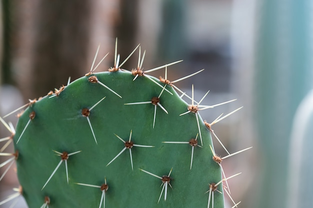 Close-up van succulente cactusinstallatie bij de serretuin.