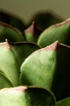 Close-up van succulente installatie