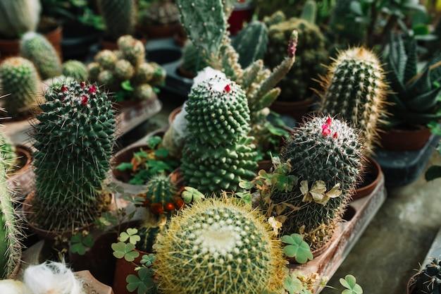 Close-up van succulente installaties die in serre groeien