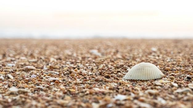 Close-up van textuurzand en zeeschelpen op het strand, overzees