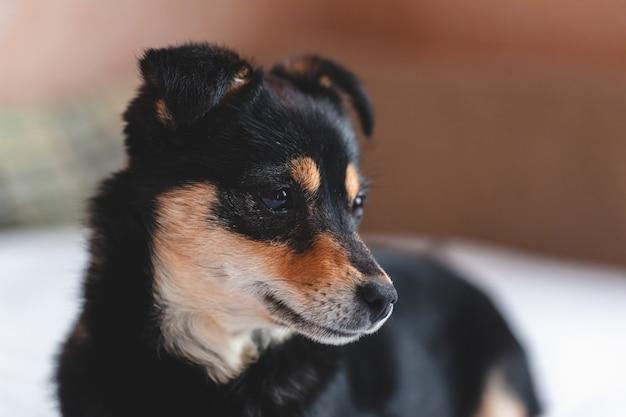 Close up van triest puppy