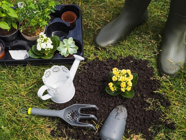 Close-up van tuinman die zich dichtbij de succulente installatie bevindt
