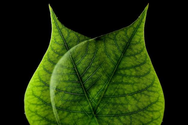 Close-up van twee bladeren onder de lichten