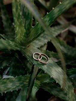 Close-up van twee gouden trouwringen die op het cactusblad liggen