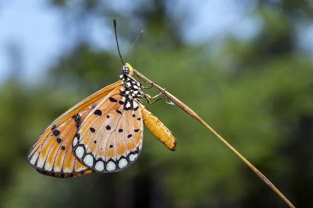 Close-up van veelkleurige vlinder