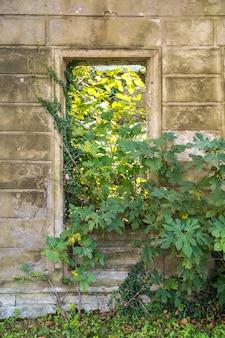 Close-up van vernietigde oude vervallen verlaten leeg huis en wilde groene plant groeit door raam zonder glas.