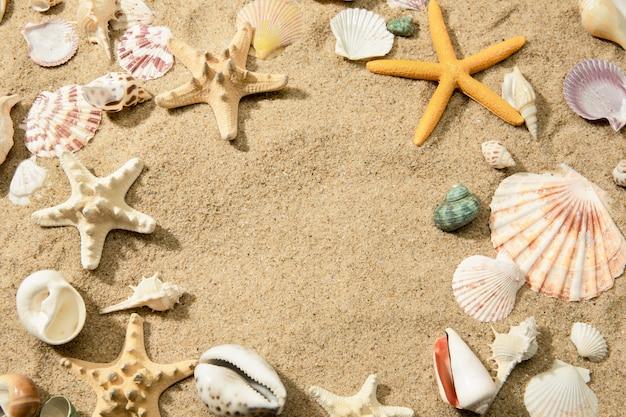 Close-up van verschillende schelpen op een zandstrand, een muur met ruimte voor tekst
