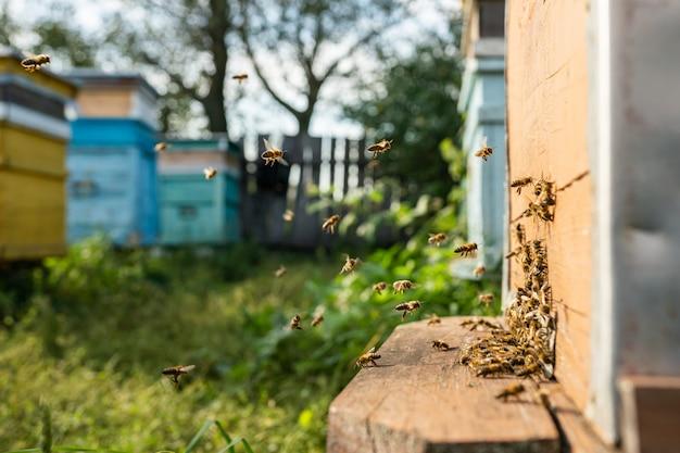 Close up van vliegende honingbijen in de bijenkorf bijenstal werkende bijen verzamelen gele stuifmeel