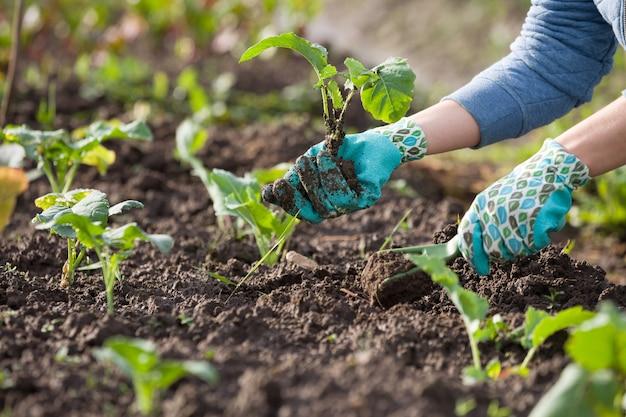 Close-up van vrouwelijke handen in beschermende handschoenen die zaailingen in de grond planten.