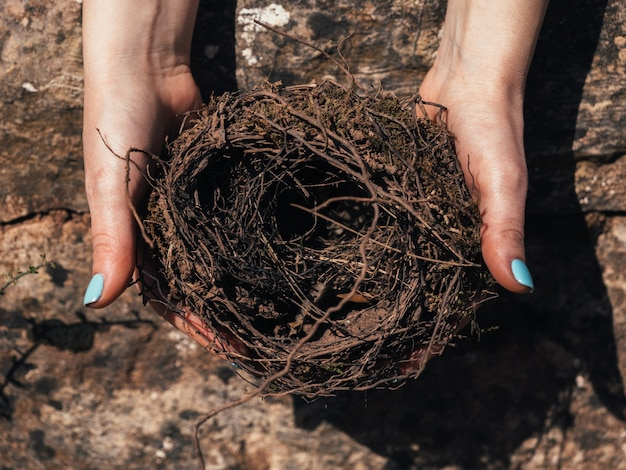 Close-up van vrouwelijke handen met een fragiel leeg vogelnest uitzicht van bovenaf concept van het lege nest-syndroom