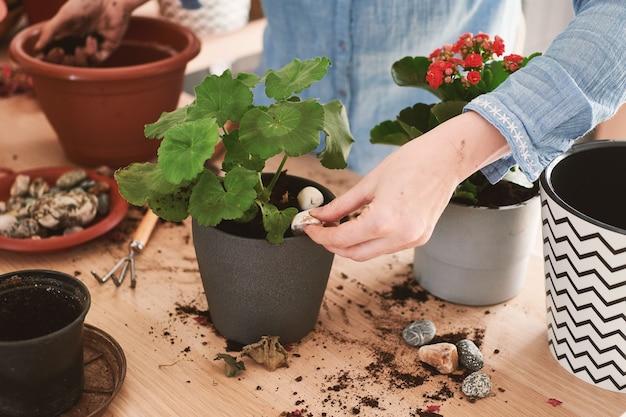 Close-up van vrouwelijke handen zijn betrokken bij de teelt en het planten van huisbloemen