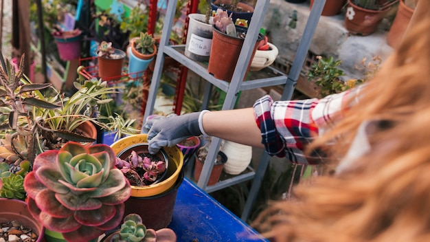 Close-up van vrouwelijke tuinman die de ingemaakte installatie in de binnenlandse tuin schikken