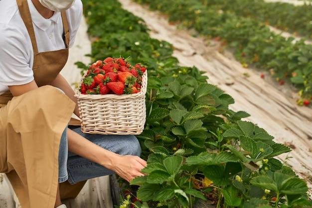 Close up van vrouwelijke tuinman in masker aardbeien plukken