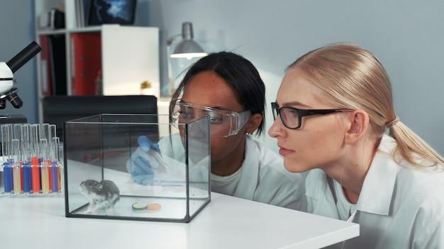 Close-up van vrouwelijke wetenschappers van gemengd ras die experimenteren met hamster door het een sluimering van speciale vloeistof te laten vallen