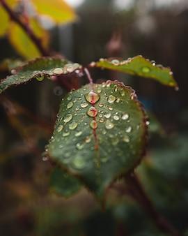 Close-up van waterdruppels op de bladeren van een plant