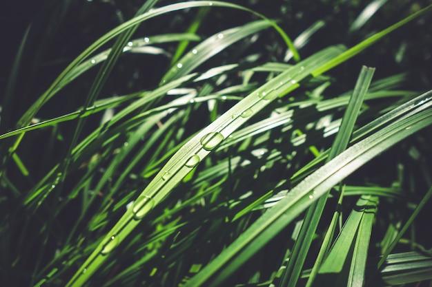 Close up van waterdruppels op groene bladeren