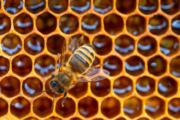 Close-up van werkende bijen op honingraat