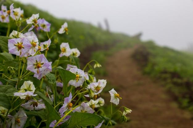 Close-up van witte bloemen met lila op de achtergrond een rood pad en een groen ongericht landschap