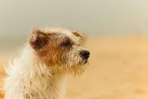 Close up van witte en bruine kruising hond zit op het strand