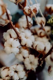 Close-up van witte katoenen bloemen