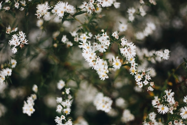 Close-up van witte snijbloem