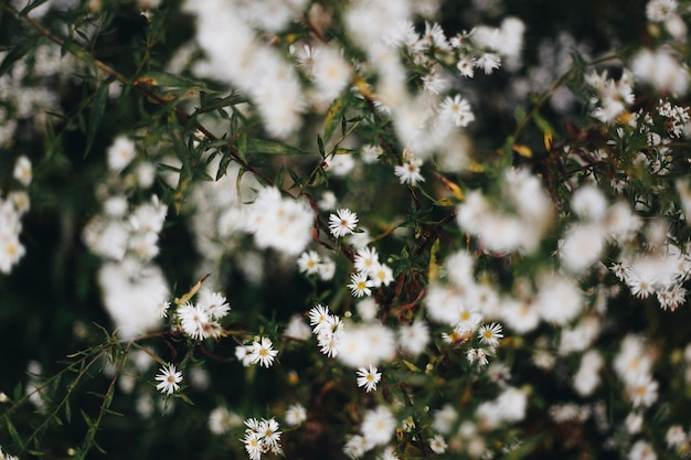 Close-up van witte snijdersbloem