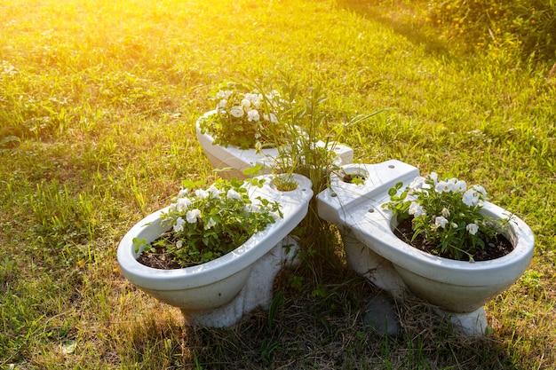 Close-up van witte toiletten in witte bloemrijke petunia's zoals potten