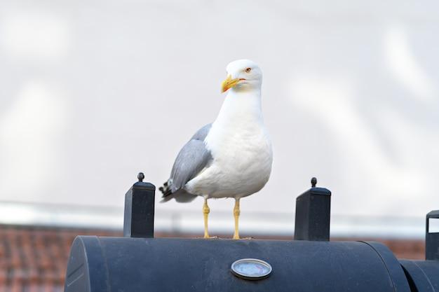 Close up van zeemeeuw vogel zittend op het dak
