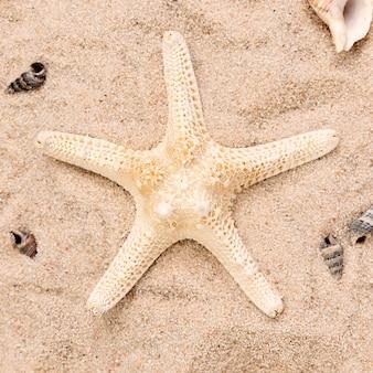 Close-up van zeester op zand