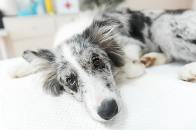 Close-up van zieke hond die op lijst in dierenartskliniek liggen