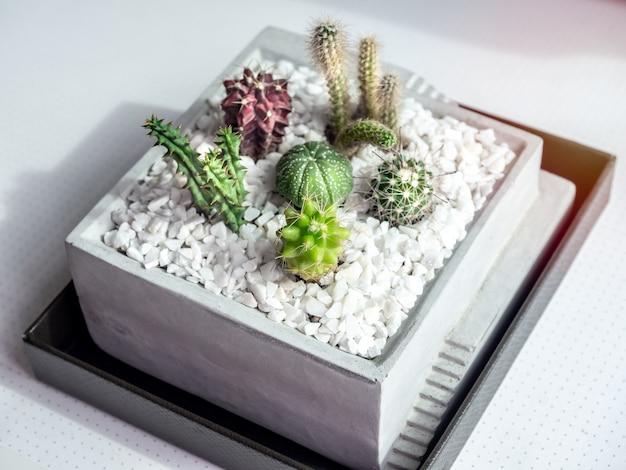 Close-up vele soorten kleine groene cactusplanten in vierkante concrete pot op witte lijst.